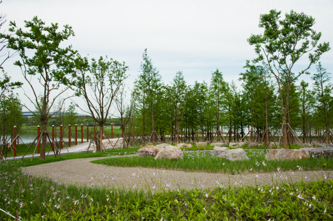 """Create a city within a park – The """"Carbon Bank"""" in the Lingang Special Area Park-SHLINGANGIC"""